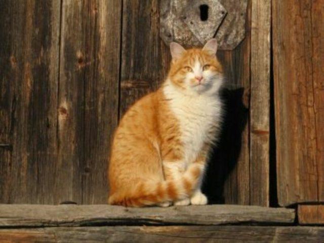 Почему кошки приходят в чужой дом — реальные причины и приметы