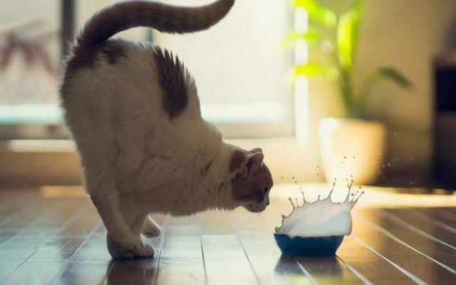 Увлекательная жизнь веселых котов