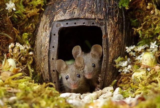 Британец обнаружил мышей в своём саду, но не выгнал их, а построил им целую мышиную деревню