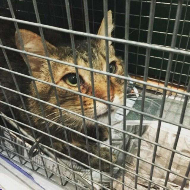 Бродячий кот подошёл к девушке-волонтёру и заявил, что больше не хочет жить на улице