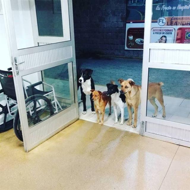 Бездомный пришёл в больницу, и не один, а с группой поддержки. Это были его собаки, и они правда волновались