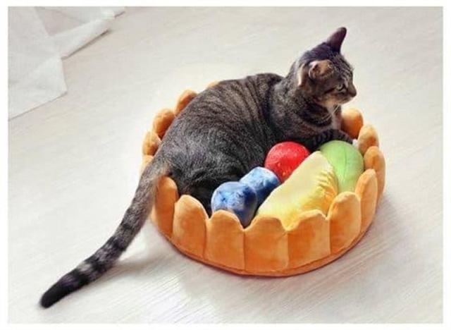 Коты сломавшие стереотип и решившие поспать в лежаках