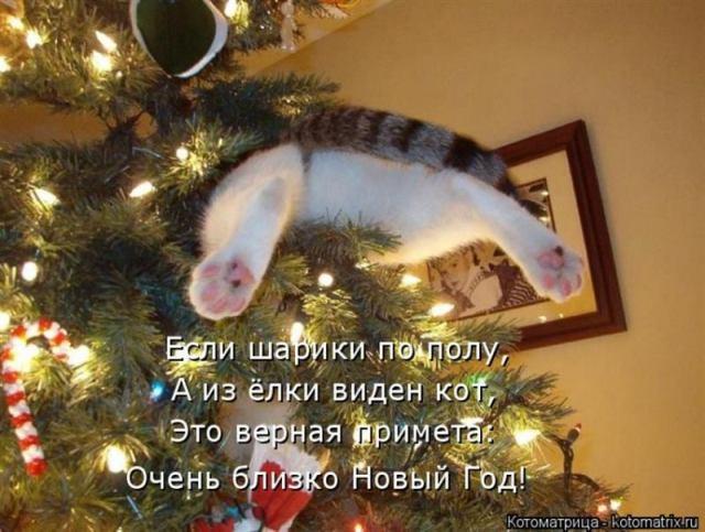 Новогодняя вражда котов и елок