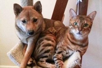 Собаки, которые решили, что они кошки