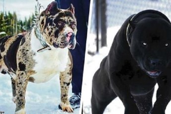 11 самых страшных пород собак, которые существуют на планете!