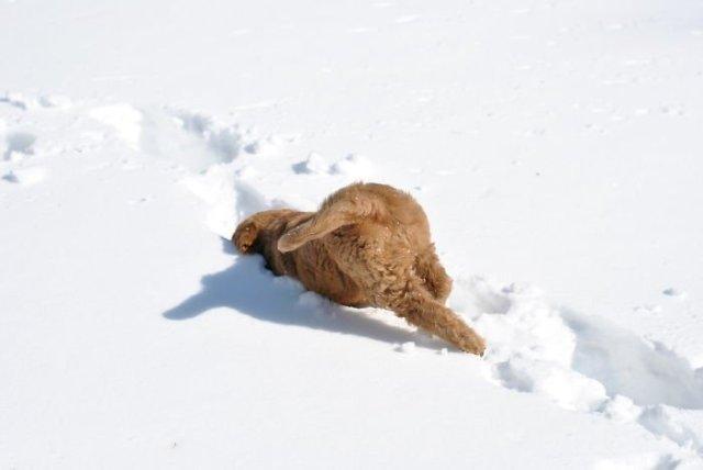 Реакция животных, которые первый раз увидели снег