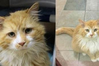 Кот прошел 19 км до дома, но хозяева решили его усыпить, отплатили за верность и любовь…