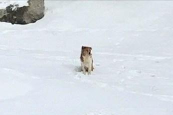 Брошенная собака была настолько верна, что ждала свою семью на морозе в течение 5 дней
