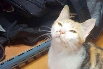 Бездомная кошка оставила необычный сюрприз в сумке хоккеиста. Милот