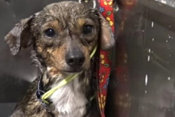 Облепленный клещами, жалкий пес жил у железной дороги, в опасной близости от поездов…