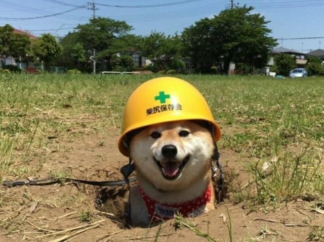 """Собаки, которые сделают все что в их силах ради звания """"Хороший мальчик"""""""