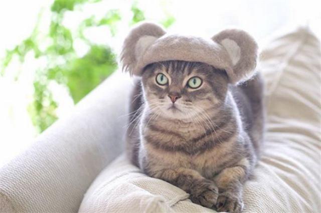 Японский фотограф делает очень фотографии модных котиков в шапочках из их же шерсти