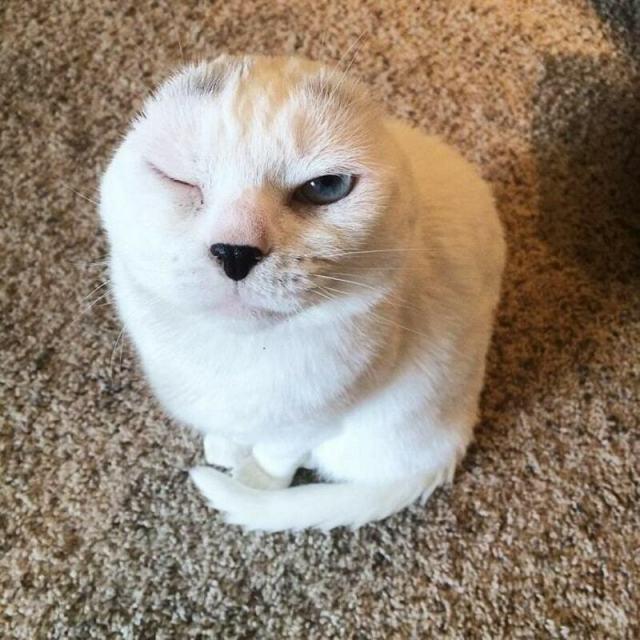 «Он похож на тюленёнка…» Девушка решила взять из приюта лечебного кота — и не прогадала!