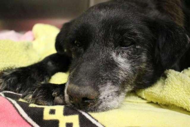 Стареющую собаку хозяин сдал в приют, но она не могла понять почему