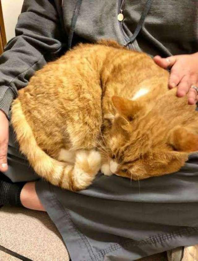 Слишком любвеобильную кошку хозяева вернули обратно в приют