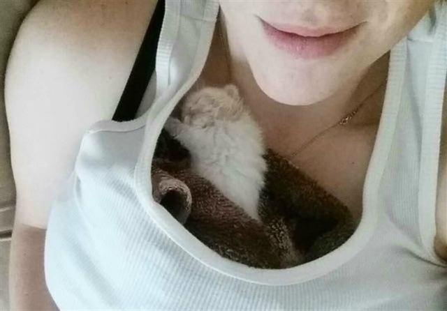 Умильная история про белоснежного котёнка и его добрую приёмную маму