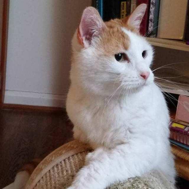 Женщина забрала кота из приюта, а на следующий день вернулась