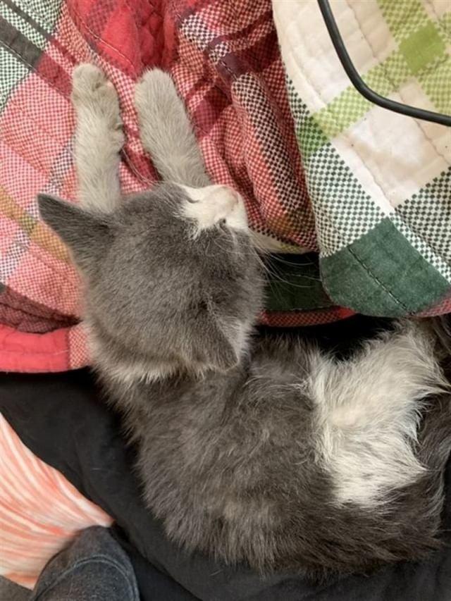 Котёнок замерзал на мусорной куче, а теперь он любим и спит в тёплой кровати