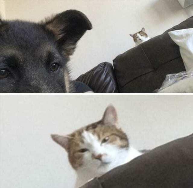 Не у всех хозяев выходит подружить собаку с кошкой, вот несколько тому примеров