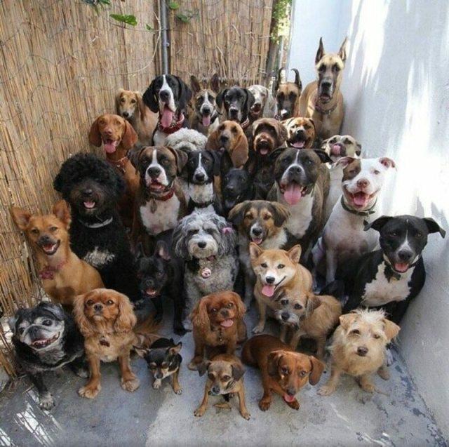 16 смешных фото животных, сделанных в удачный момент