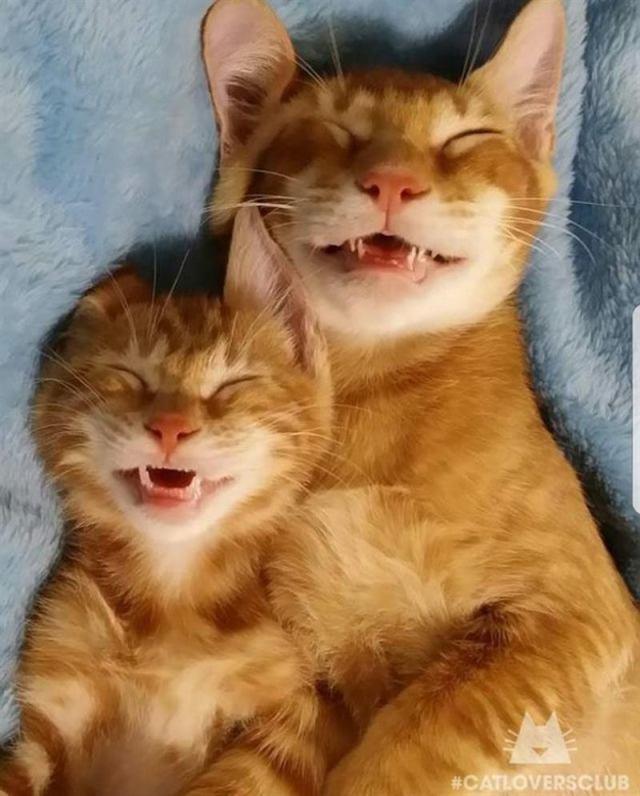 Котики, которые горазды поспать когда угодно