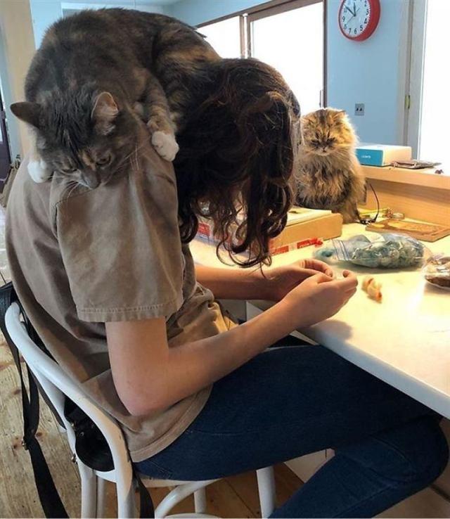 20 смешных кошек, чьи нелепые и странные выходки не дают скучать их хозяевам