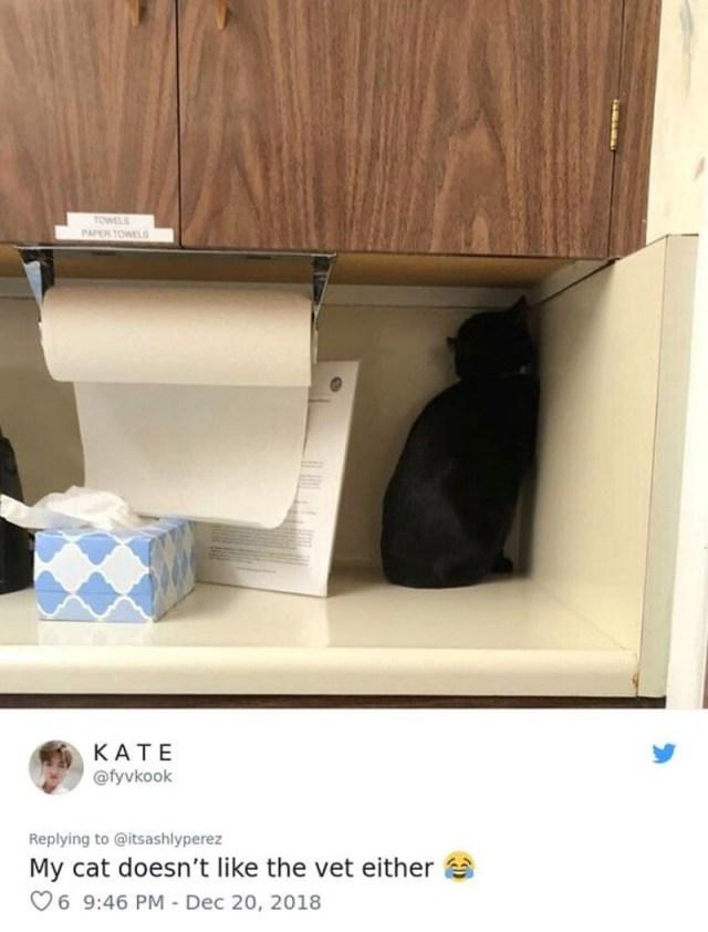 26 забавных примеров как коты прячутся от ветеринаров, используя подручные средства