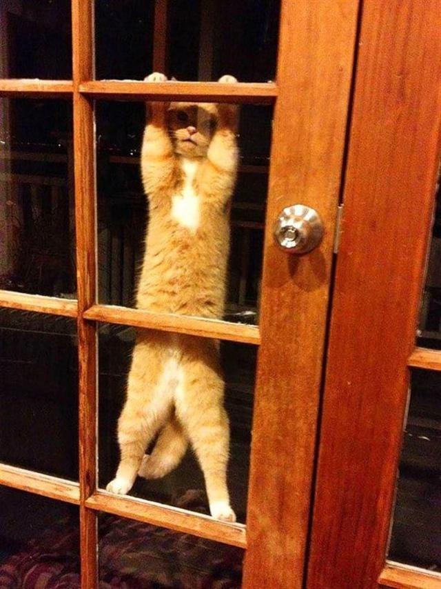Смешные животные, которые хотят попасть в дом