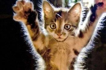 Как известно, кот всегда пригодится в хозяйстве
