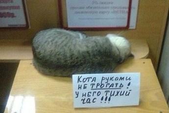 Всеобщие любимцы - красавчики коты!
