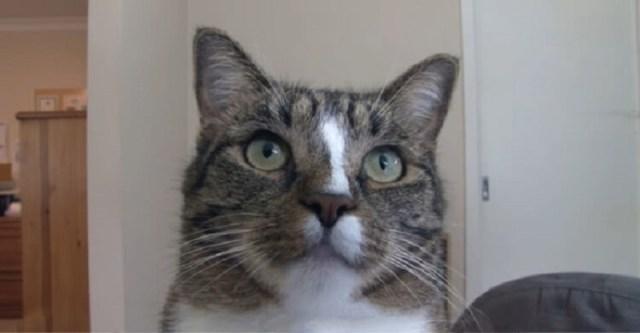 В книгу рекордов Гинесса эта кошка попала как самая умная на планете