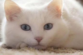 Фотографии, взглянув на которые вы лишитесь всякого желания заводить себе кота