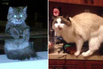 Оккупация неизвестных кошек, веселые фотографии усатых шкодников