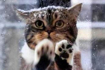 Чтобы спасти своих малыше, замерзающих на морозе, кошка пришла в кафе просить помощи у людей