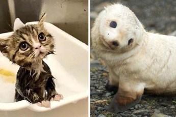 Очаровательные животные, которые покорят вас своей милотой