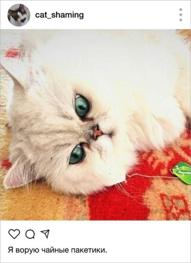 Собрание фотографий пакостливыйх котов. Вся боль несчастных хозяев котов-тиранов