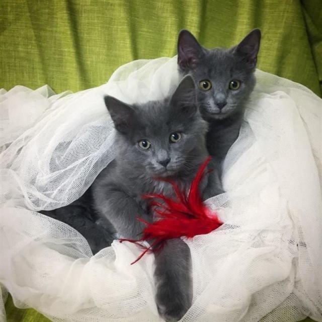 Счастливая история спасения котят от морозов