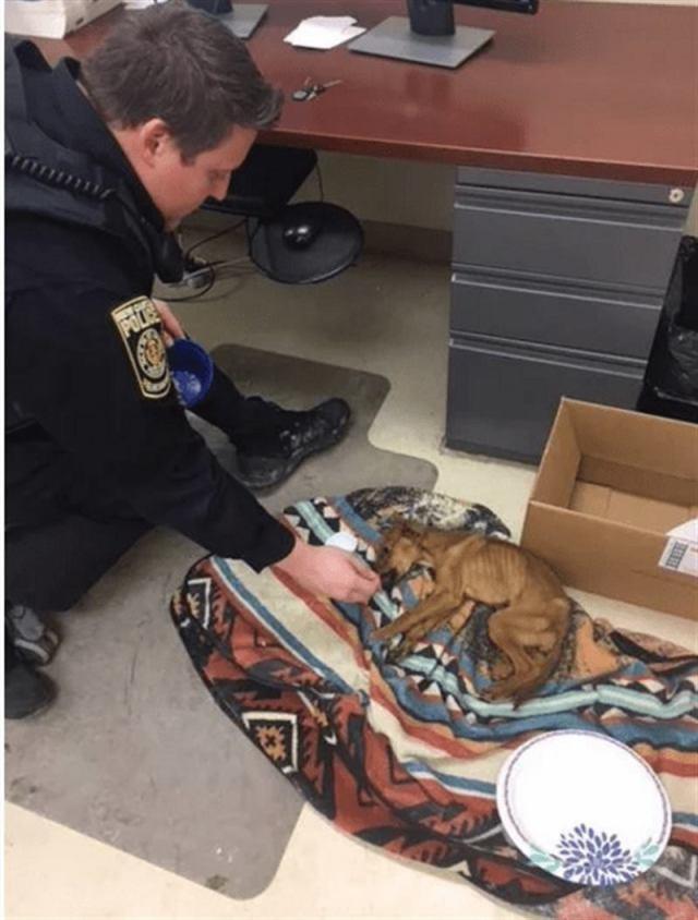 Полиция приехала расследовать ограбление, а пришлось спасать щенка