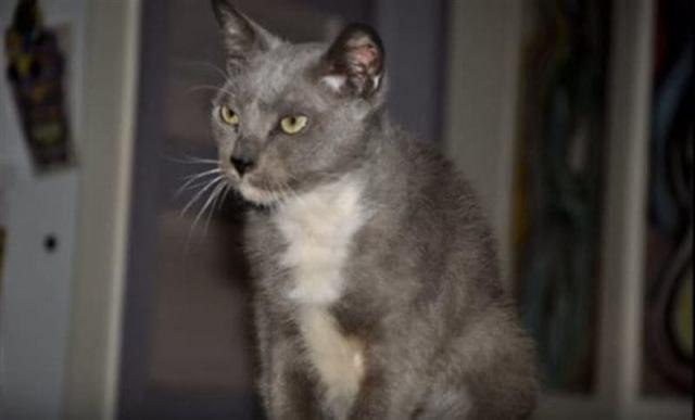 Кошка полжизни провела в клетке с собакой, а теперь ежедневно благодарит своих спасителей