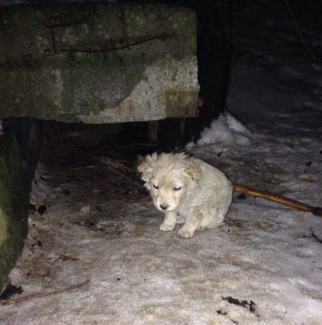 Крохотный щенок дрожал от холода, прячась за огромный бак