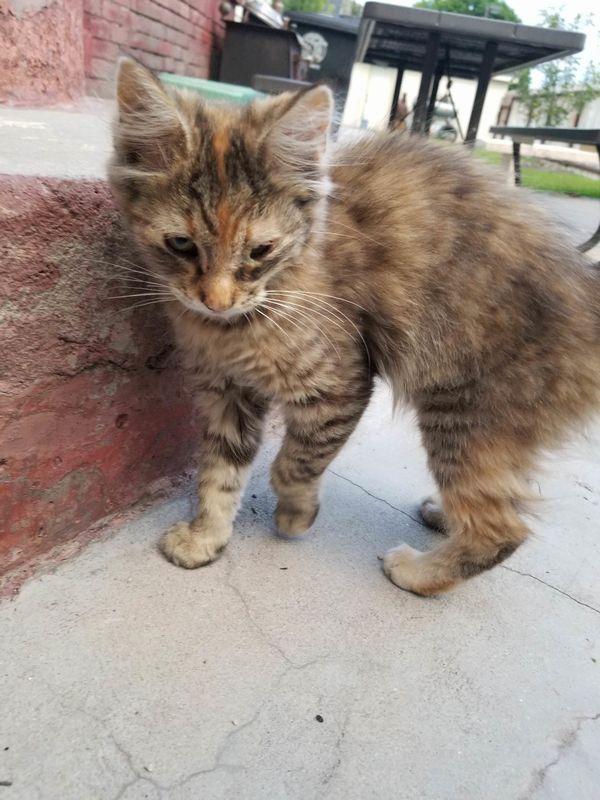 Котёнка-девочку нашли под уличным фонарём – она прекратила плакать и начала мурчать, когда поверила, что её любят