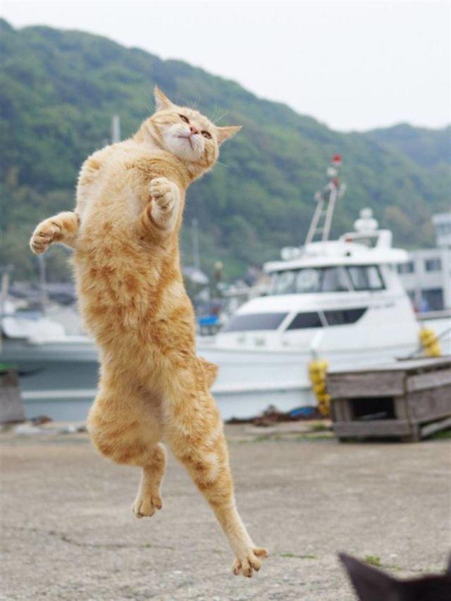 Забавные фото зависших в воздухе котов