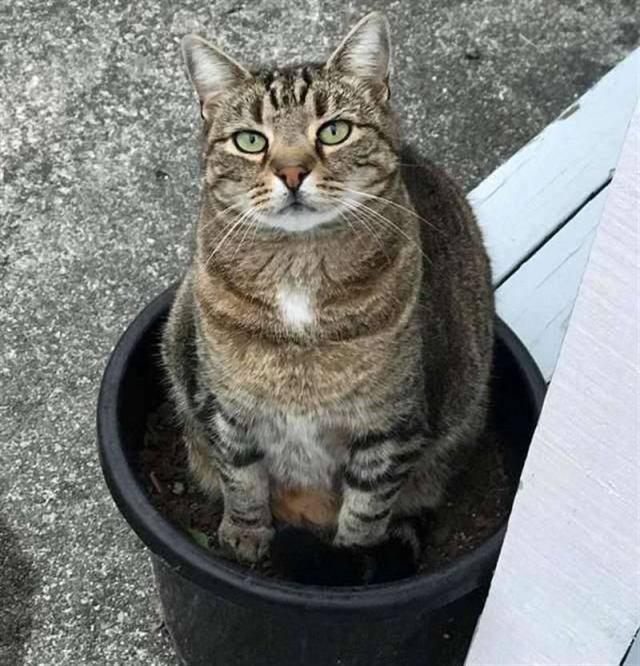 Толстый кот не пролезал в дверцу, но оказалось вовсе не из-за полноты