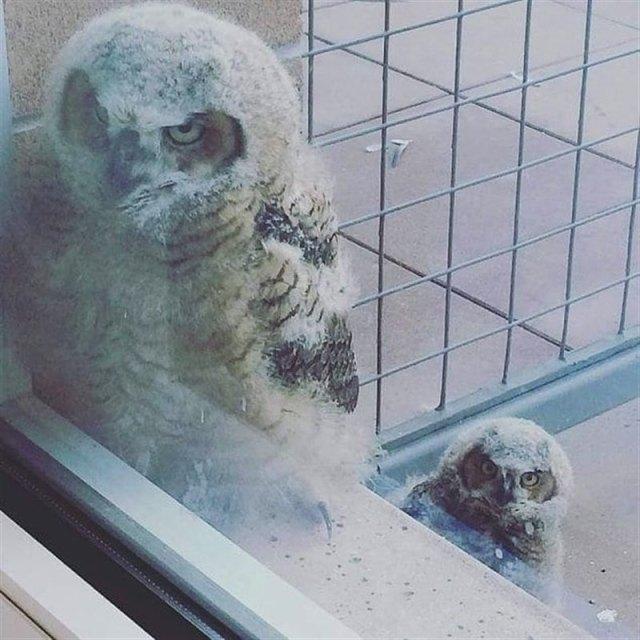 Необычные животные, которые стучаться к нам в дом