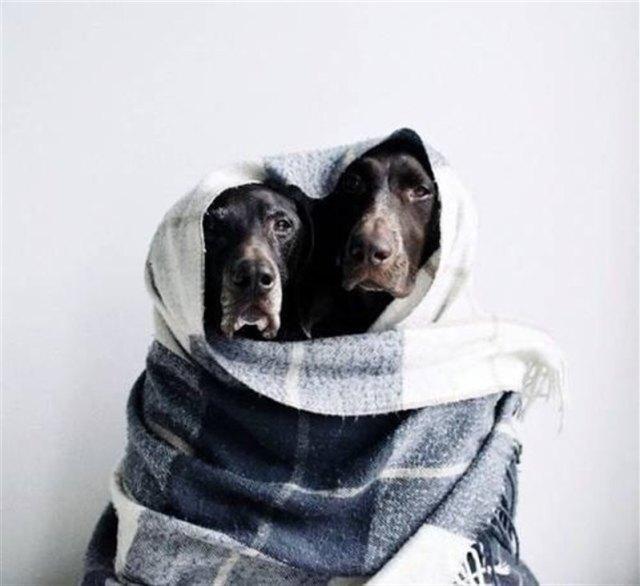 Породистая беременная собака в Крыму уже не надеялась на спасение, но ей очень повезло