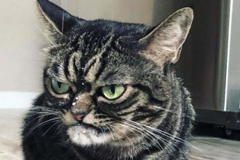 Угрюмая кошка стала новым мемом, который показывает вселенскую ненависть к понедельникам