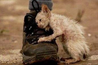 Самые трогательные фотографии бездомных животных, от которых сжимается сердце