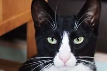 Британский кот постоянно воровал у соседей всякую мелочёвку. Но на этот раз он принёс пакет денег