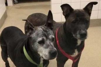 Хозяева зашли в зоомагазин, заперли в туалете двух старых собак и сбежали