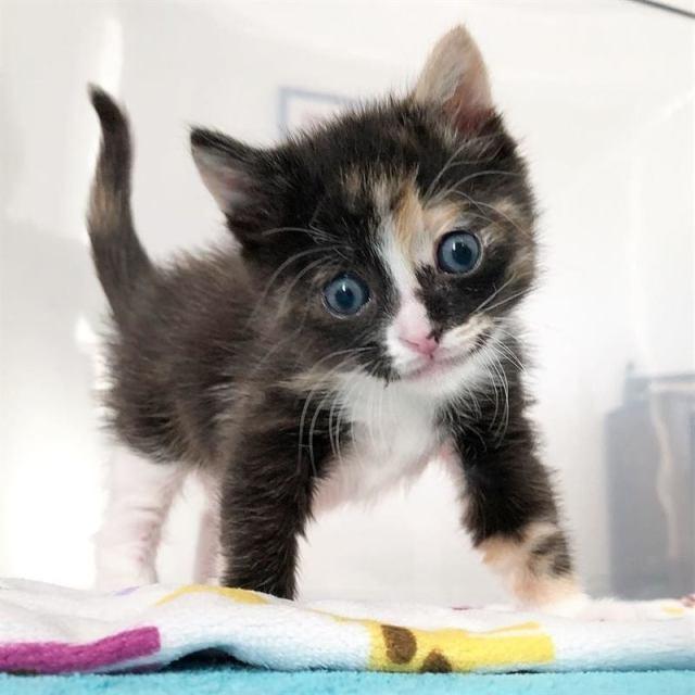 Котёнок, которого откачали новорождённым, подрос и научился улыбаться